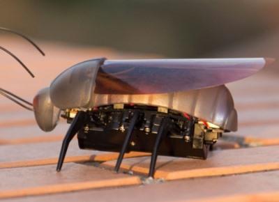 Роботы-насекомые управляются с iPhone